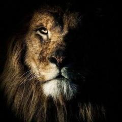 La prétendue prétention  du Lion