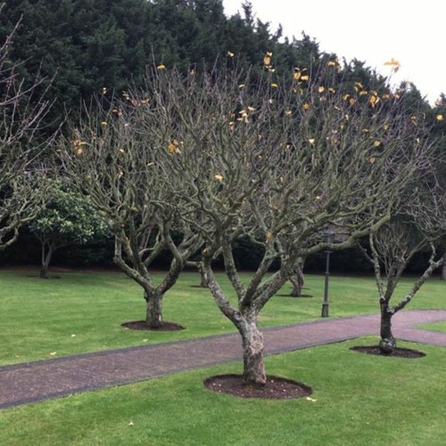 Pruning Fruit Trees with Adam Pasco