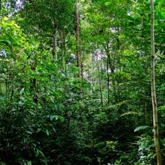 Zogzog monkey yelling in the Amazonian Rainforest