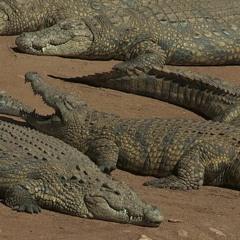 Crocodile Smiles (Prod. Sille)