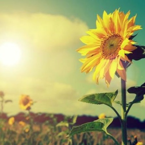 Sunshine Song - Fairnie and Colman