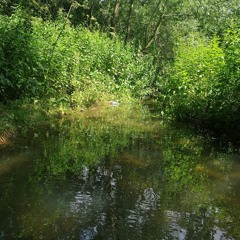 Where the Willows Creak