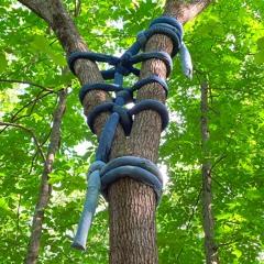 Christy Gast | Blake's Hitch, Ladder Tie, Limb Loop (Treetopping)