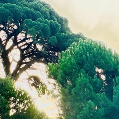 Memory Mix #004 - Ethno series - August 2021 (Alentejo, Portugal)