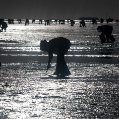 FAO Podcast - Empowering women clam harvesters