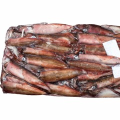 Corporations Blocking Small Scale Fishers from accessing Squid | Radio 786