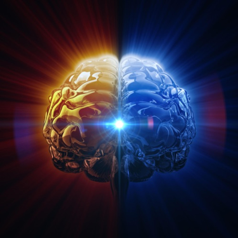 Beyin Gelişimi Nasıl Gerçekleşiyor?