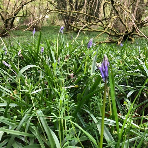 Cleave Wood 26 April 2020