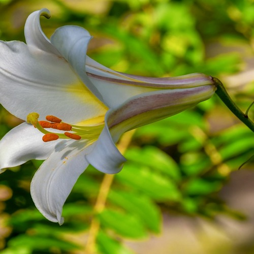 "Audio Sermon, 3/1/2020, ""Consider the Lilies"" - Mark Stephan facilitator"