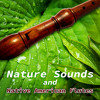 Nature Sounds with Flute Music