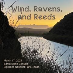 Wind, Ravens, Reeds