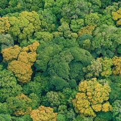 Comment des données aident à protéger les forêts ?