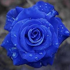 Blue Rose (Nightcore)