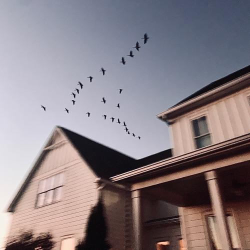 where do the birds go?