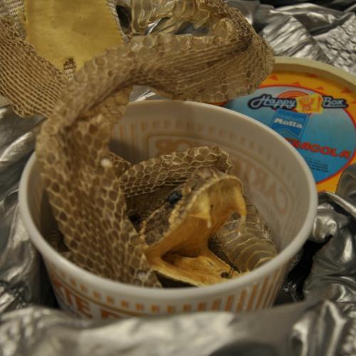 4.33 Schlangengift