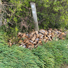 Stone Clearing with Richard Herring - Chapter 96