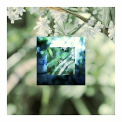 Moss's Lilypad