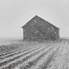 A Barn in a Blizzard - 13/4/2020 - Leistila Fields