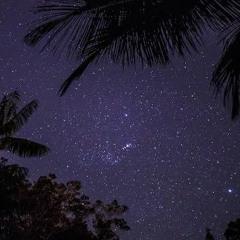Atlantic Forest - Night At Ilha Bela