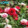 Download Long Ride Mp3