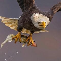 birds.mp3