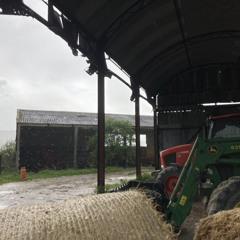 Rain In A Barn