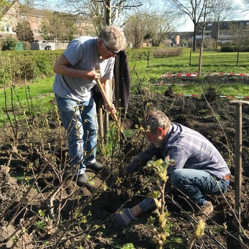 Podcast 4 buurtgroep Risdam-Noord Groen! over het vergroenen van je wijk