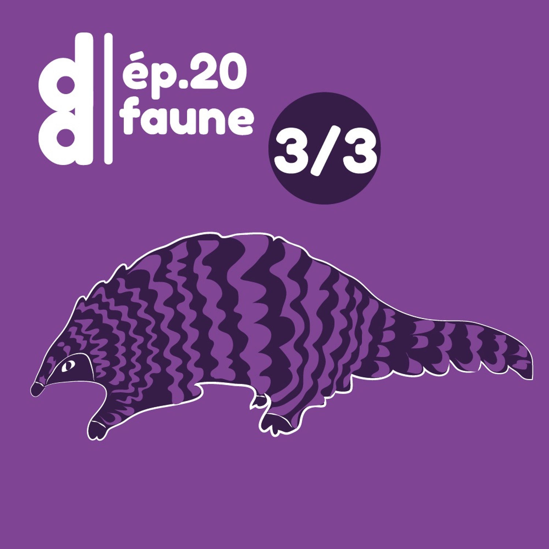 DESSIN DESSEIN // EP20 Faune - Partie 3 : Les animaux synanthropes avec Chloé Cavillon