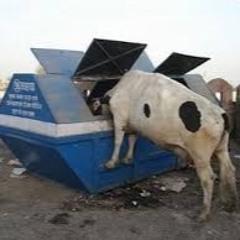 Dumpster Dub Mix
