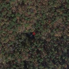 Woodpecker drumming at wildlife pond in Ouachita National Forest (Arkansas, USA) 5am Mar 08, 2020