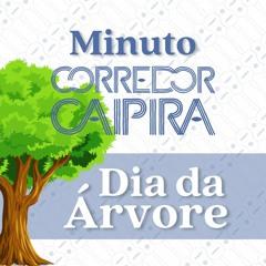 Dia Da Árvore   Minuto Corredor Caipira