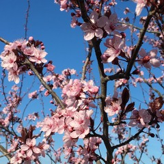 Spring Buds (Locked Radio 19.04.2020)