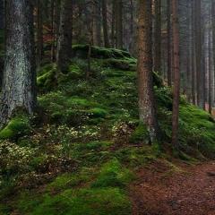 Into The Forest [Dj Set 04.2020 (148 - 158BPM)][WAV DOWNLOAD]