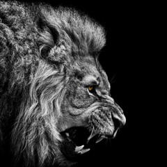 Lions Of The Tribe Of Judah