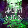Music to Calm Down (New Age Music)