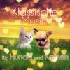 Nocturne No. 1 (Klassische Musik für Katzen)