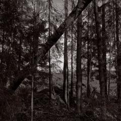 In the Woods by the Field - 25/3/2021 - Preiviiki Fields