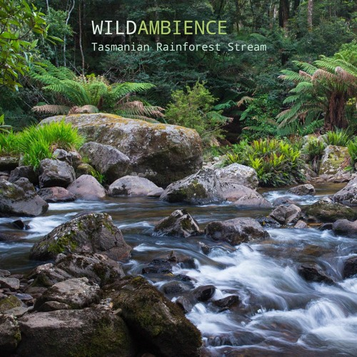 Tasmanian Rainforest Stream - Album Sample