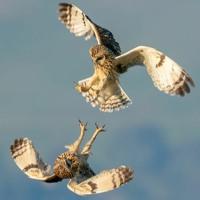 Evasion (Fly Away)