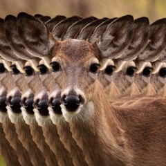 Headlights In Deer