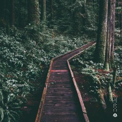 kyoshi - forest