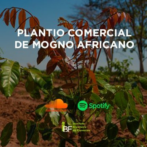 Podcast - Plantio Comercial de Mogno Africano