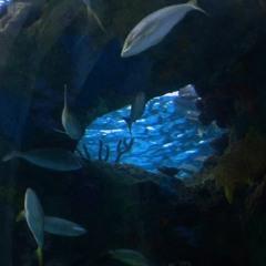 IGOR360 - LAGOON BLUE MIX