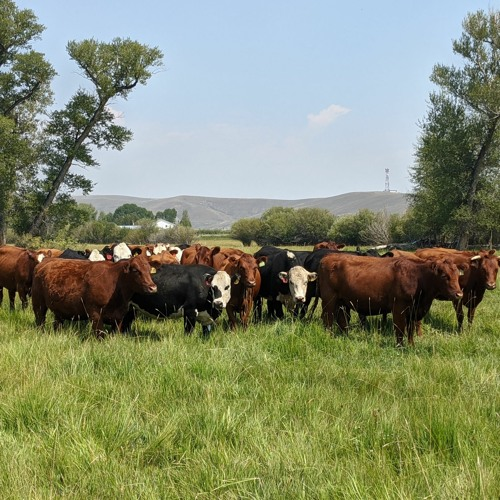 Parker Pastures (Gunnison, CO)