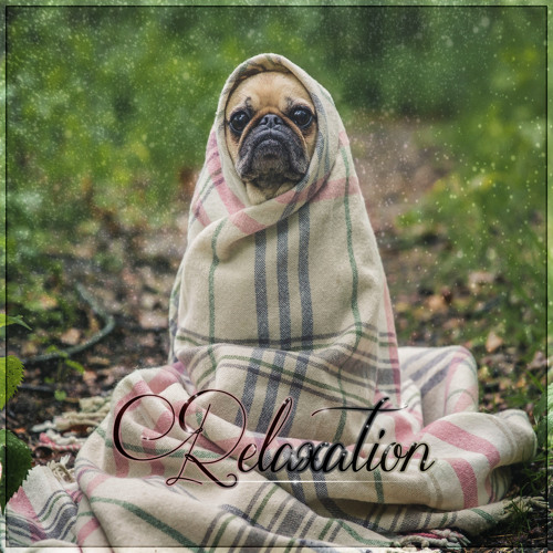 Relaxation - Soothing Music for Cats, Relaxing Melodies to Calm Down Your Pet