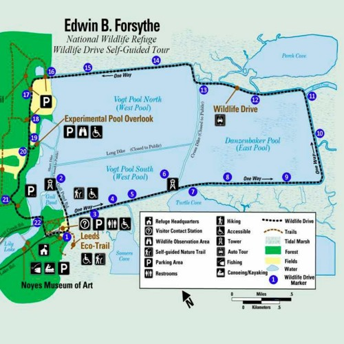 Forsythe NWR Wildlife Drive Audio Tour