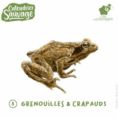Audiofocus - Les grenouilles et crapauds