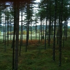 Newborough forest, Isle of Angelsey, WALES
