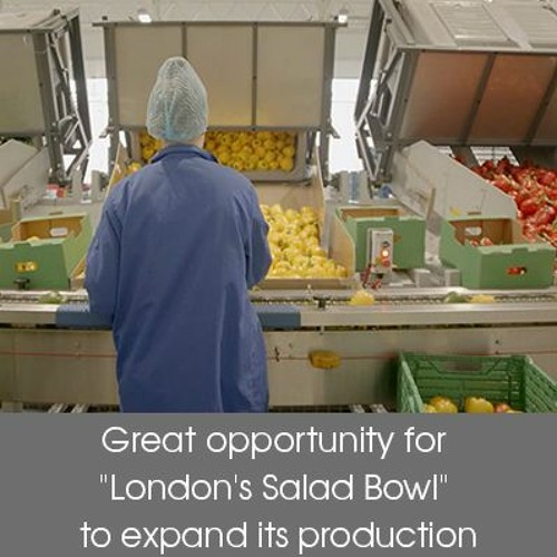 """Article: Great opportunity for """"London's Salad Bowl"""" to expand its production"""