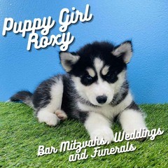 puppy girl roxy